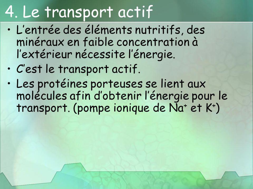 4. Le transport actif L'entrée des éléments nutritifs, des minéraux en faible concentration à l'extérieur nécessite l'énergie. C'est le transport acti
