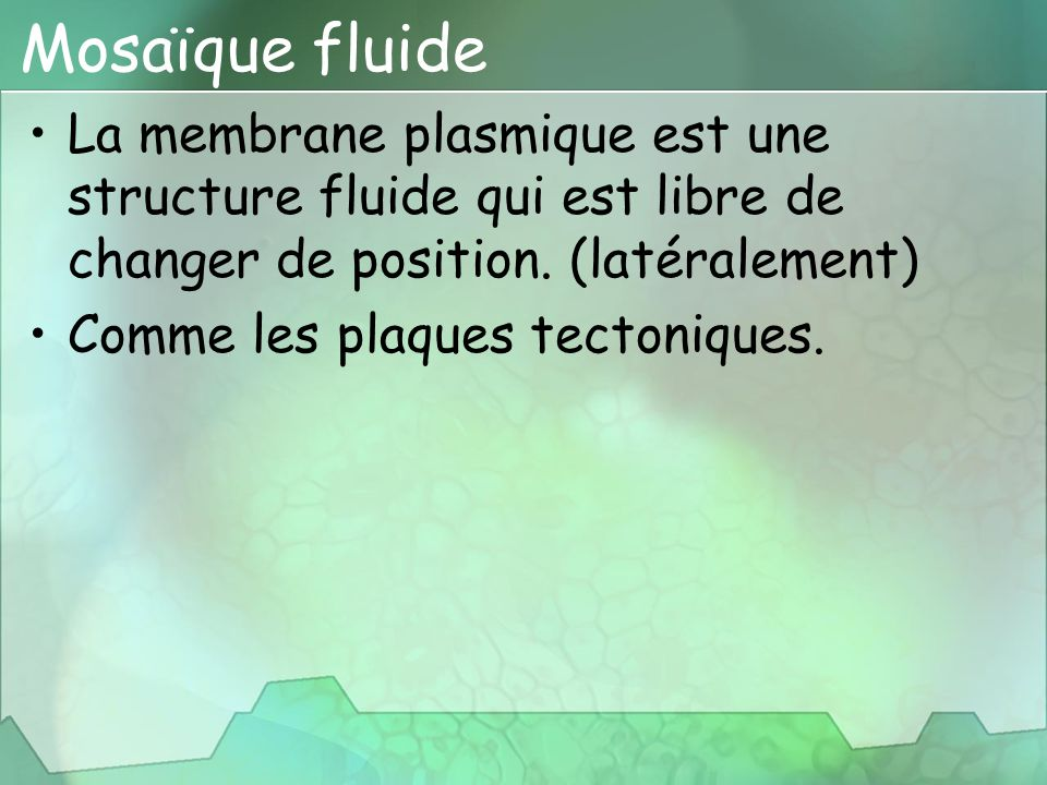 Mosaïque fluide La membrane plasmique est une structure fluide qui est libre de changer de position. (latéralement) Comme les plaques tectoniques.