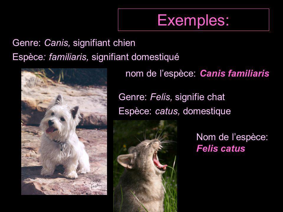 Exemples: Genre: Canis, signifiant chien Espèce: familiaris, signifiant domestiqué nom de l'espèce: Canis familiaris Genre: Felis, signifie chat Espèce: catus, domestique Nom de l'espèce: Felis catus