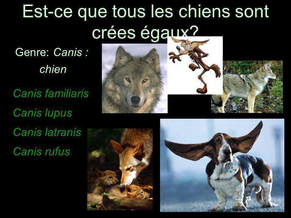 Est-ce que tous les chiens sont crées égaux? Genre: Canis : chien Canis familiaris Canis lupus Canis latranis Canis rufus