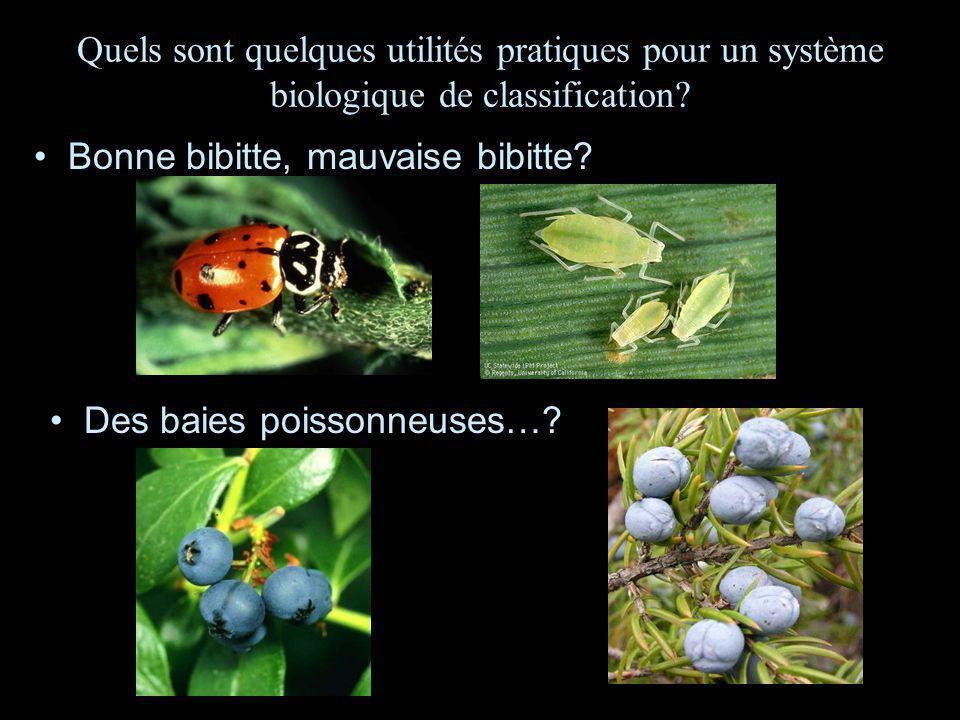 Quels sont quelques utilités pratiques pour un système biologique de classification? Bonne bibitte, mauvaise bibitte? Des baies poissonneuses…?