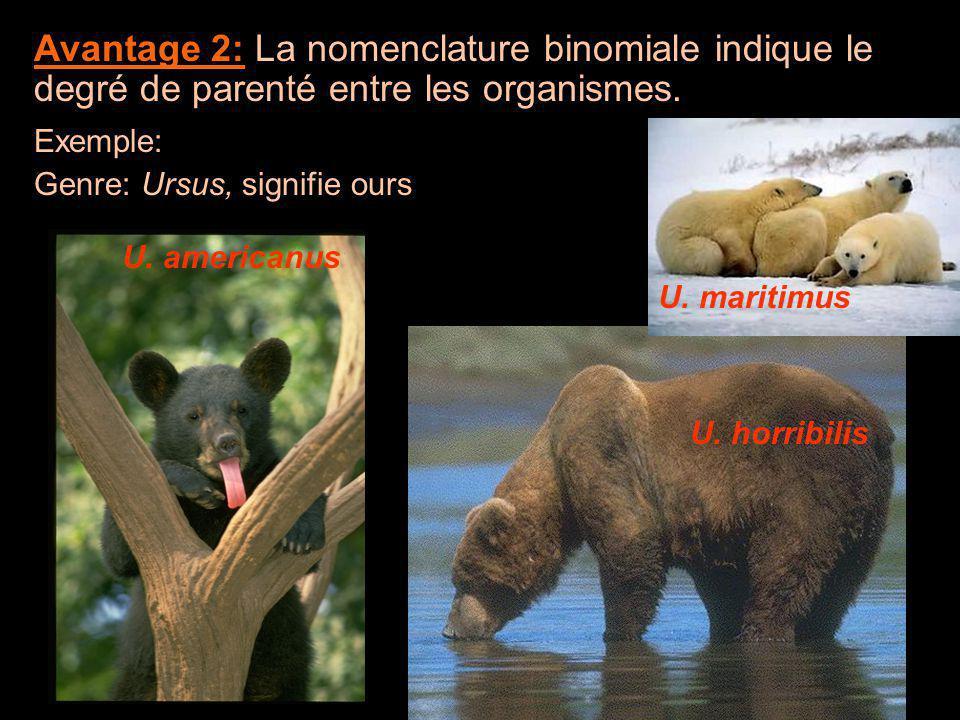Avantage 2: La nomenclature binomiale indique le degré de parenté entre les organismes. Exemple: Genre: Ursus, signifie ours U. americanus U. horribil
