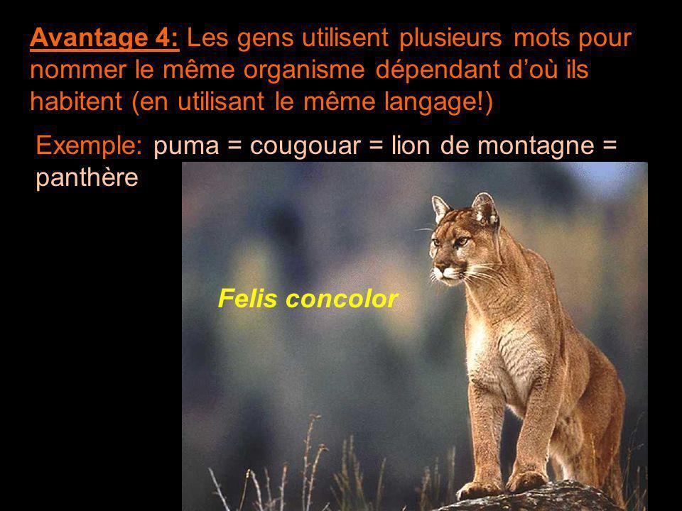 Avantage 4: Les gens utilisent plusieurs mots pour nommer le même organisme dépendant d'où ils habitent (en utilisant le même langage!) Exemple: puma = cougouar = lion de montagne = panthère Felis concolor