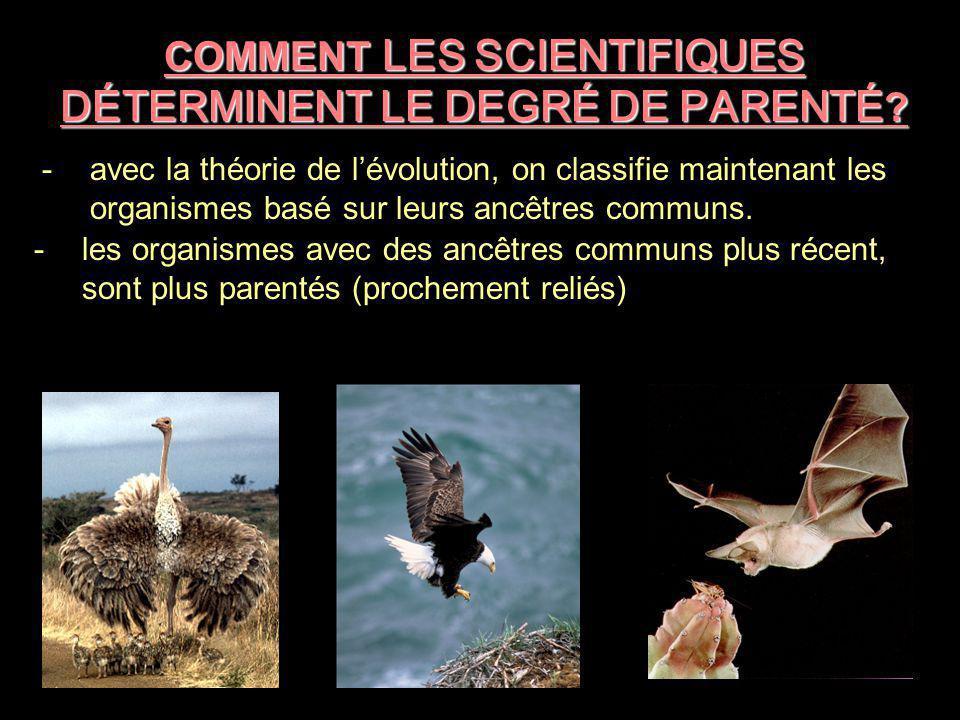COMMENT LES SCIENTIFIQUES DÉTERMINENT LE DEGRÉ DE PARENTÉ? -avec la théorie de l'évolution, on classifie maintenant les organismes basé sur leurs ancê