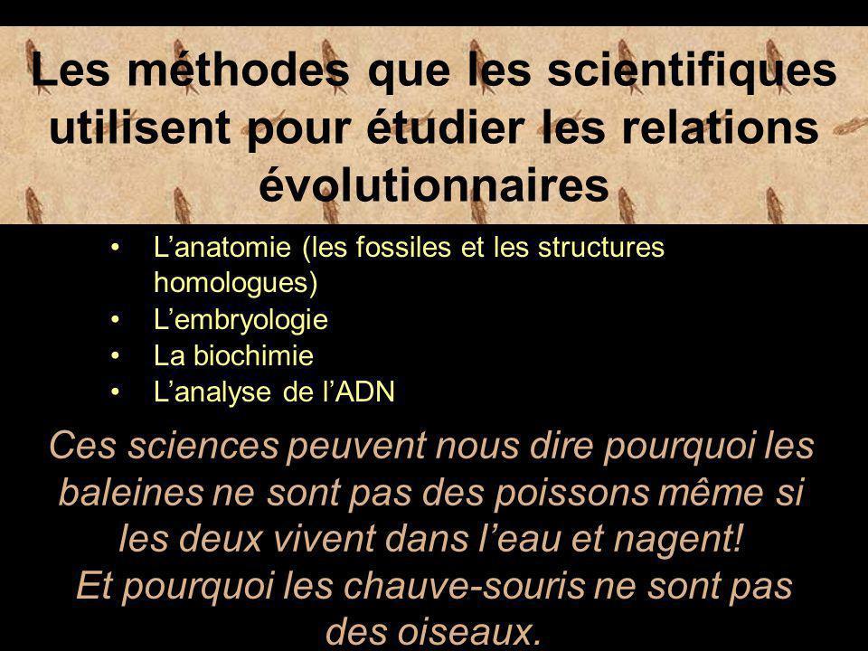 Les méthodes que les scientifiques utilisent pour étudier les relations évolutionnaires L'anatomie (les fossiles et les structures homologues) L'embryologie La biochimie Ces sciences peuvent nous dire pourquoi les baleines ne sont pas des poissons même si les deux vivent dans l'eau et nagent.