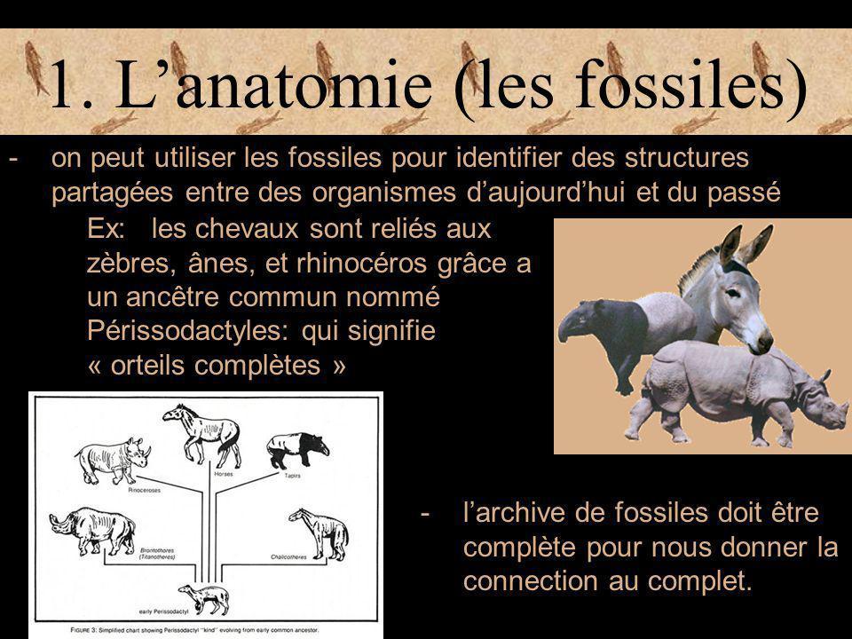 1. L'anatomie (les fossiles) -on peut utiliser les fossiles pour identifier des structures partagées entre des organismes d'aujourd'hui et du passé Ex