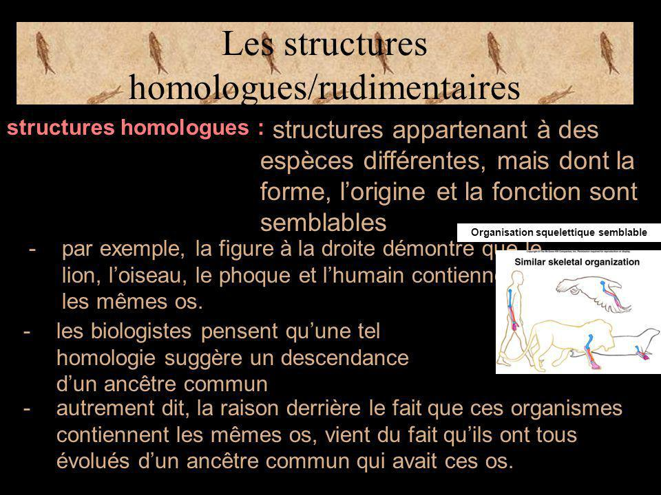 Les structures homologues/rudimentaires structures homologues : structures appartenant à des espèces différentes, mais dont la forme, l'origine et la