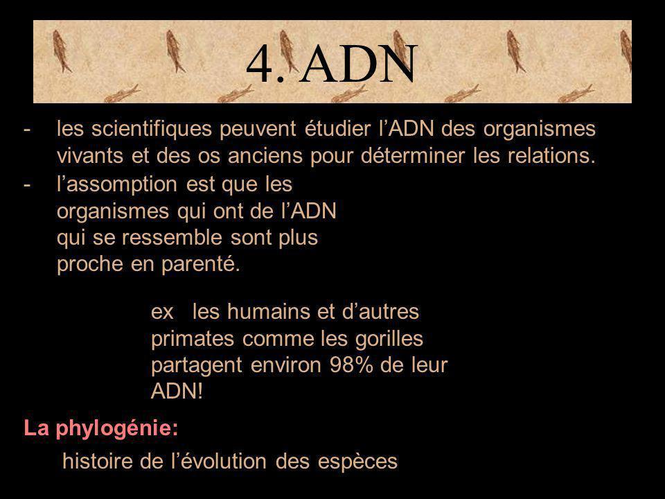 4. ADN -les scientifiques peuvent étudier l'ADN des organismes vivants et des os anciens pour déterminer les relations. -l'assomption est que les orga