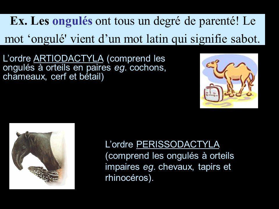 L'ordre HYRACOIDEA (hyraxes).L'ordre PROBOSCIDEA (éléphants).
