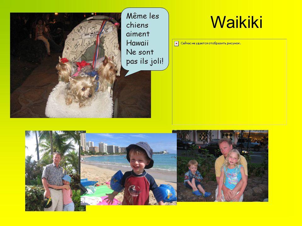 Même les chiens aiment Hawaii Ne sont pas ils joli! Waikiki