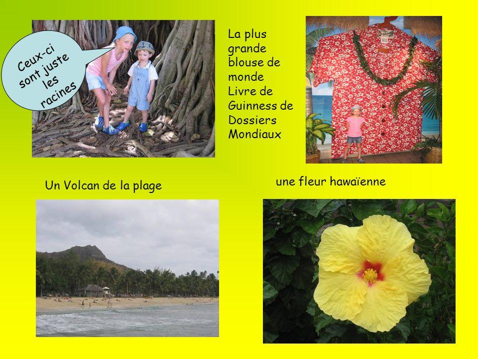 une fleur hawaïenne Un Volcan de la plage Ceux-ci sont juste les racines La plus grande blouse de monde Livre de Guinness de Dossiers Mondiaux