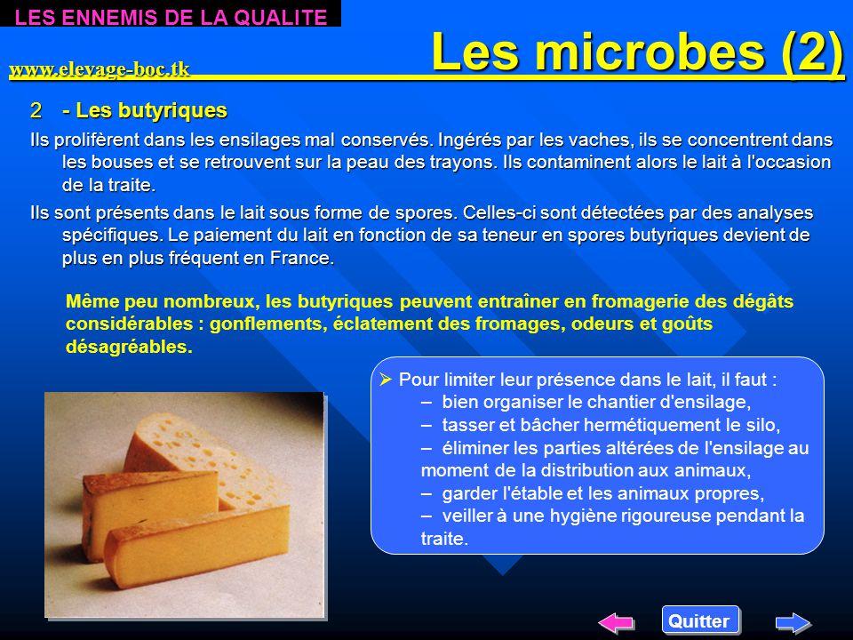Les microbes (2) Les microbes (2) 2- 2- Les butyriques Ils prolifèrent dans les ensilages mal conservés.