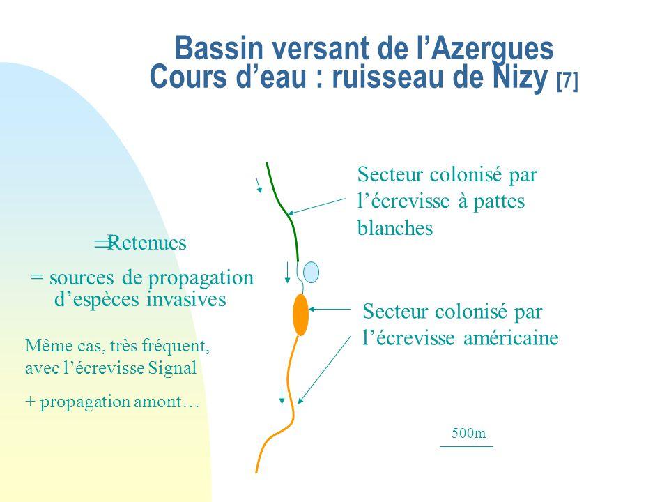 Parc Naturel Régional du Pilat, cours d'eau : le Bassenon (2005) [6] Densité très élevée, 3 à 4 ind./m² observés 15 spécimens observés/ 800m, dont 3 m