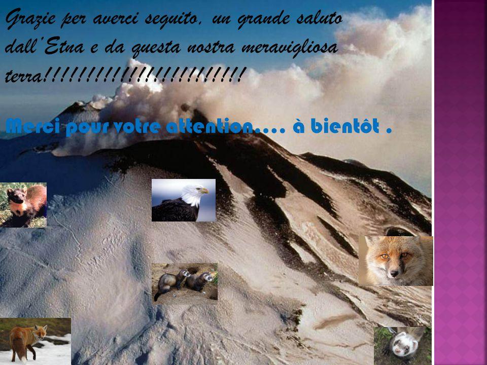 Grazie per averci seguito, un grande saluto dall'Etna e da questa nostra meravigliosa terra!!!!!!!!!!!!!!!!!!!!!!!.