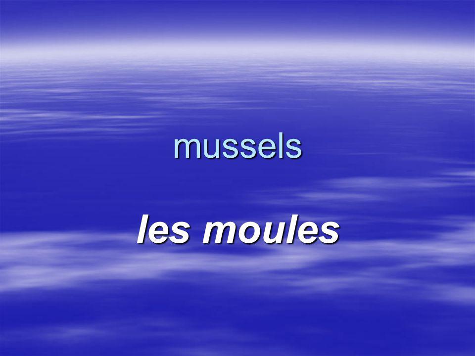 mussels les moules