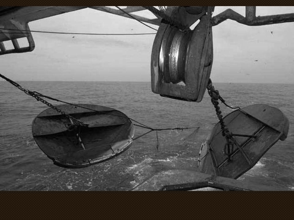Un chalut Un chalut, c est une grande poche de filet en forme d entonnoir maintenue ouverte horizontalement par des panneaux rectangulaires ou ovales, et verticalement par des flotteurs disposés sur la lèvre supérieure.
