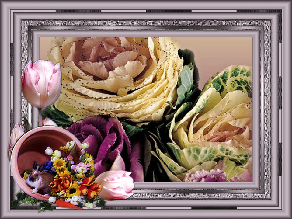 Respire tous leurs parfums Sans y mettre les mains, Pour que même fanées, Elles reviennent chaque année... Les fleurs