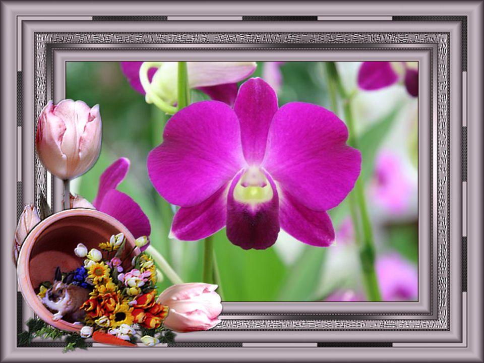 Elles naissent dans un mystère Et jaillissent de la terre, Avec toutes les couleurs, Elles apportent le bonheur … Les fleurs