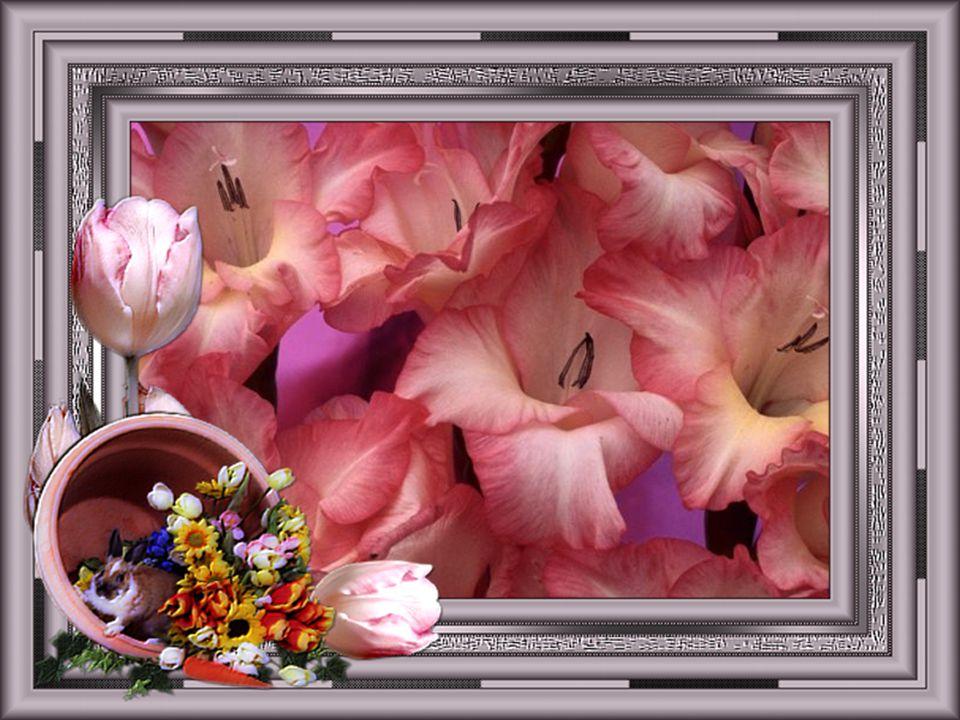 Dans la rosée elles s'ouvrent Et le soir elles se couvrent, Sans faire le moindre bruit Pour s'endormir la nuit.