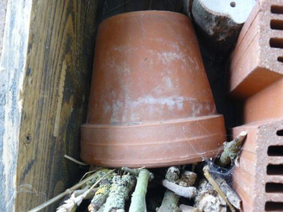Pour les forficules (perce-oreilles) grand prédateurs nocturnes de pucerons, un pot de fleur rempli de paille. Liez-le avec une ficelle ou du raphia.