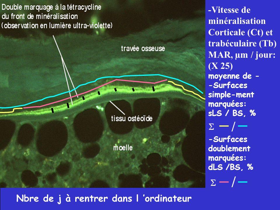 Nbre de j à rentrer dans l 'ordinateur -Vitesse de minéralisation Corticale (Ct) et trabéculaire (Tb) MAR, µm / jour: (X 25) moyenne de - -Surfaces si