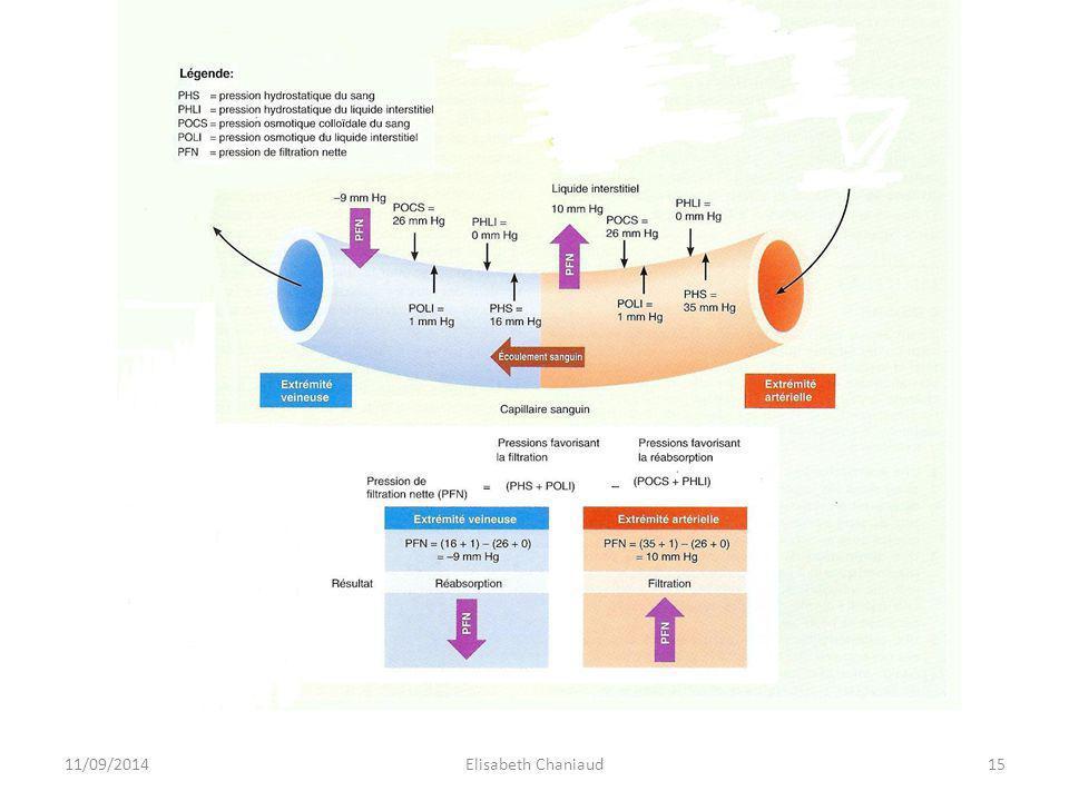 2- La circulation lymphatique 2-1 Les différents vaisseaux lymphatiques 11/09/201416Elisabeth Chaniaud