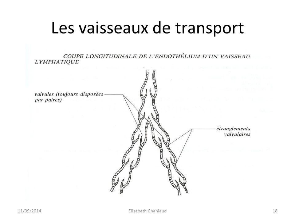 2- La circulation lymphatique 2-2 Le réseau lymphatique 11/09/201419Elisabeth Chaniaud