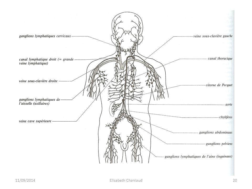 2- La circulation lymphatique 2-3 Les ganglions ou nœuds lymphatiques 11/09/201421Elisabeth Chaniaud