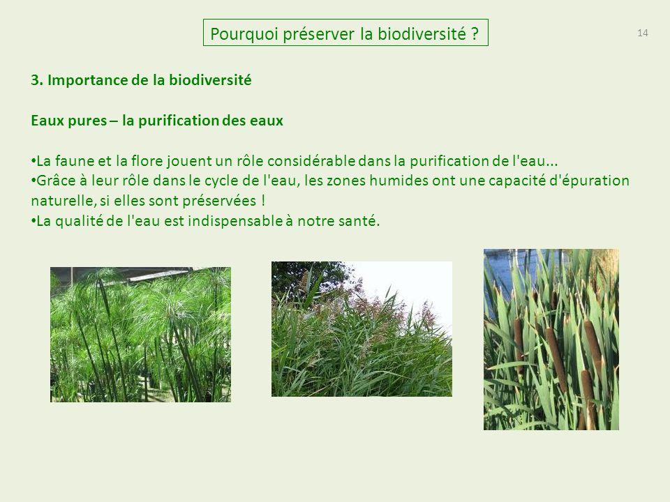 14 Pourquoi préserver la biodiversité ? 3. Importance de la biodiversité Eaux pures – la purification des eaux La faune et la flore jouent un rôle con