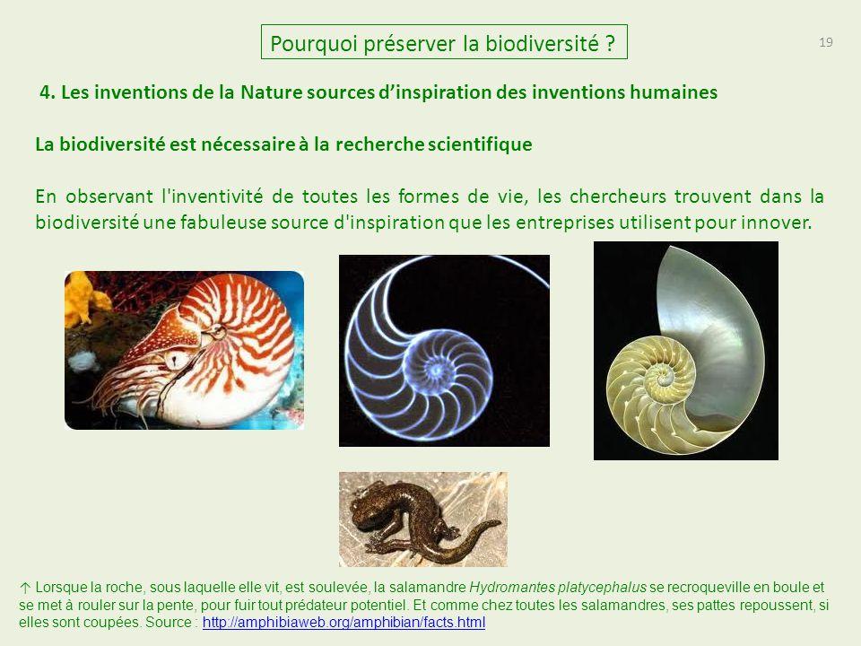 19 Pourquoi préserver la biodiversité ? La biodiversité est nécessaire à la recherche scientifique En observant l'inventivité de toutes les formes de