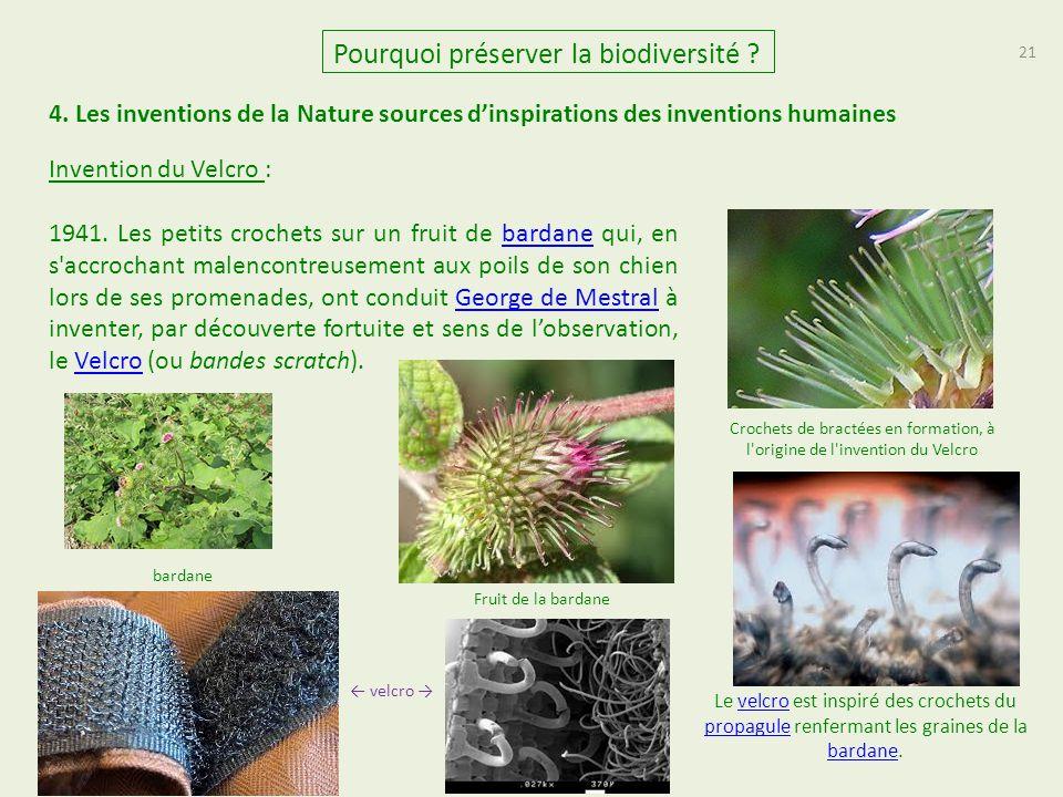 21 Pourquoi préserver la biodiversité ? 4. Les inventions de la Nature sources d'inspirations des inventions humaines Invention du Velcro : 1941. Les