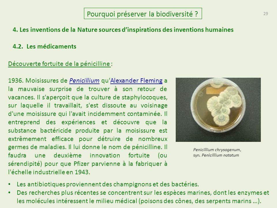 29 Pourquoi préserver la biodiversité ? 4. Les inventions de la Nature sources d'inspirations des inventions humaines Découverte fortuite de la pénici