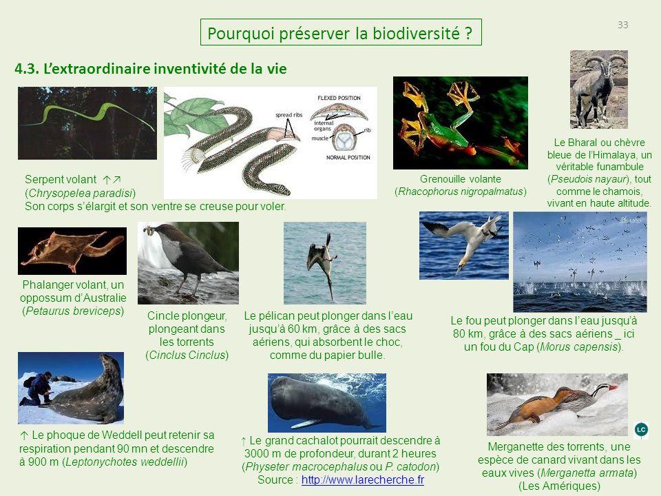 33 Pourquoi préserver la biodiversité ? 4.3. L'extraordinaire inventivité de la vie Serpent volant ↑↗ (Chrysopelea paradisi) Son corps s'élargit et so