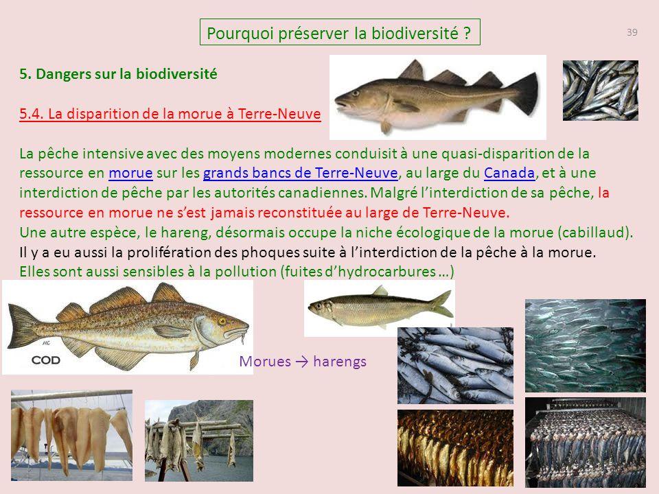 39 Pourquoi préserver la biodiversité ? 5. Dangers sur la biodiversité 5.4. La disparition de la morue à Terre-Neuve La pêche intensive avec des moyen