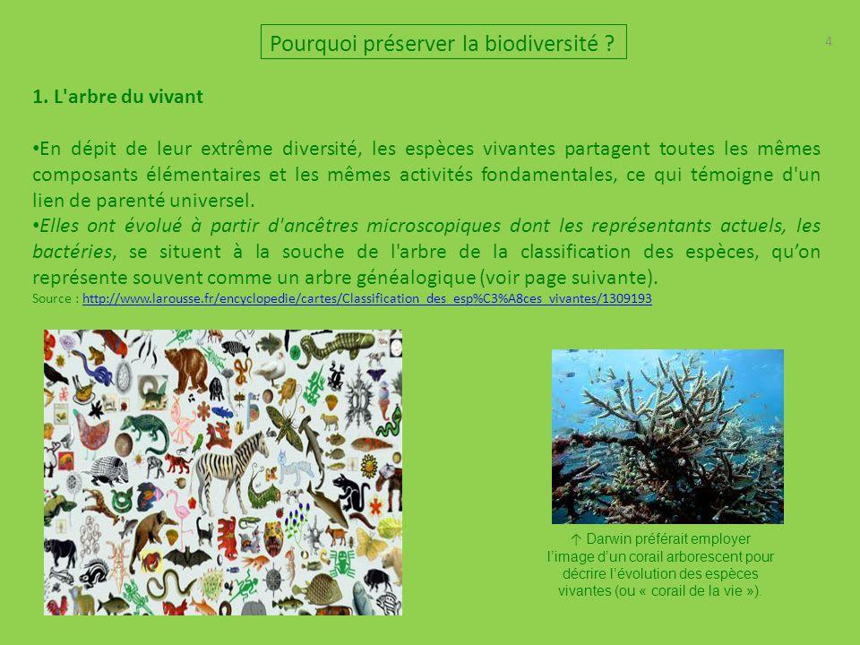 5 5 Pourquoi préserver la biodiversité ? 1. L arbre du vivant