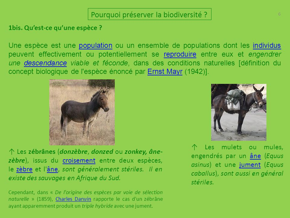 6 Pourquoi préserver la biodiversité ? 1bis. Qu'est-ce qu'une espèce ? Une espèce est une population ou un ensemble de populations dont les individus