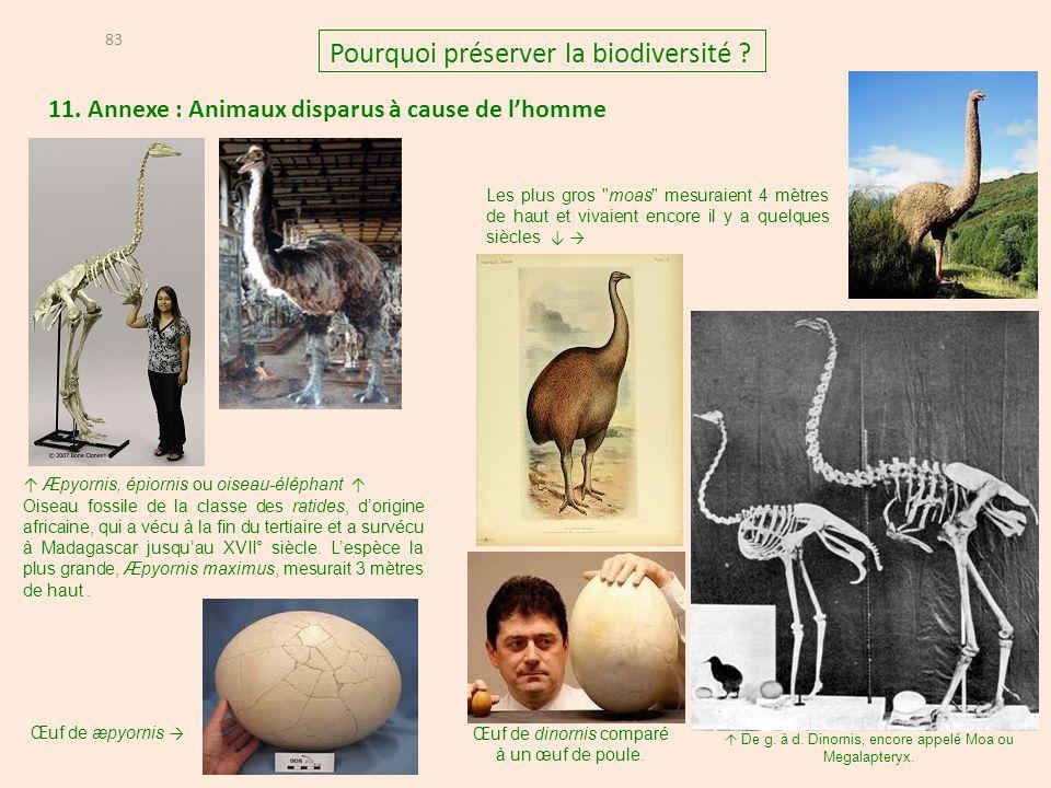 11. Annexe : Animaux disparus à cause de l'homme 83 Pourquoi préserver la biodiversité ? ↑ De g. à d. Dinornis, encore appelé Moa ou Megalapteryx. Les