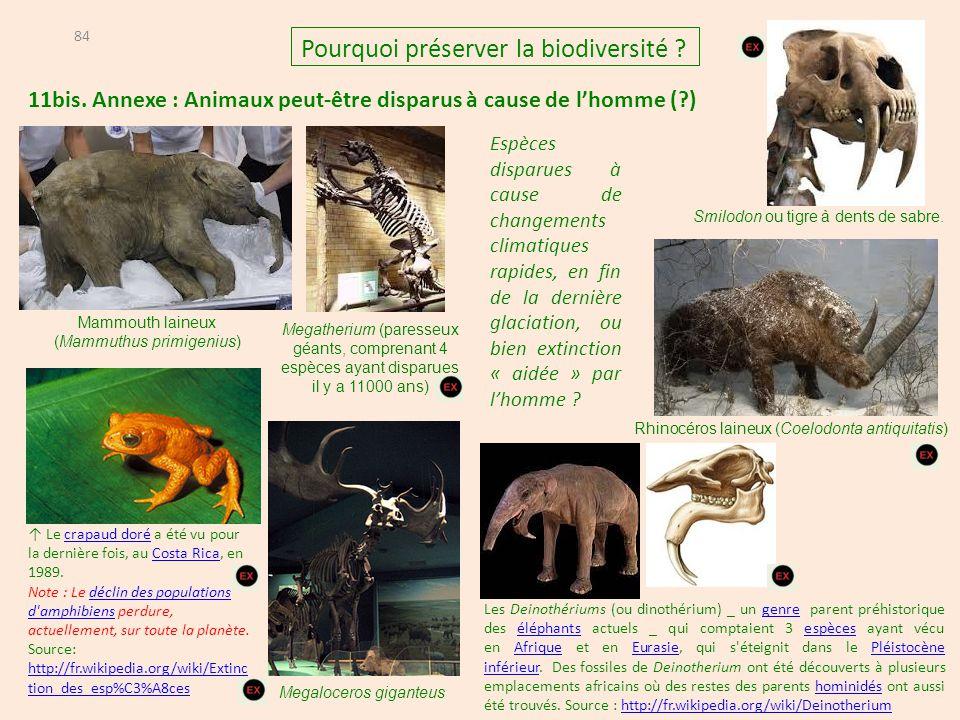 11bis. Annexe : Animaux peut-être disparus à cause de l'homme (?) 84 Pourquoi préserver la biodiversité ? Rhinocéros laineux (Coelodonta antiquitatis)