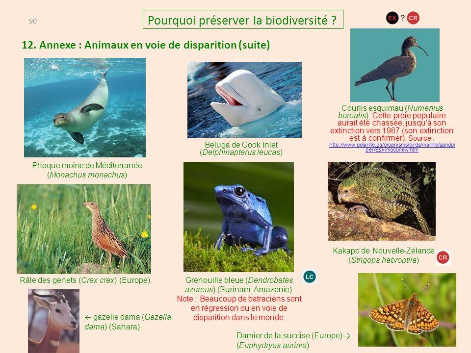 12. Annexe : Animaux en voie de disparition (suite) 90 Pourquoi préserver la biodiversité ? Phoque moine de Méditerranée (Monachus monachus) Beluga de