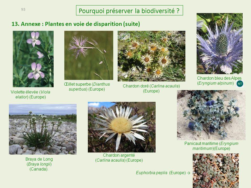 Violette élevée (Viola elatior) (Europe) 13. Annexe : Plantes en voie de disparition (suite) 93 Pourquoi préserver la biodiversité ? Œillet superbe (D