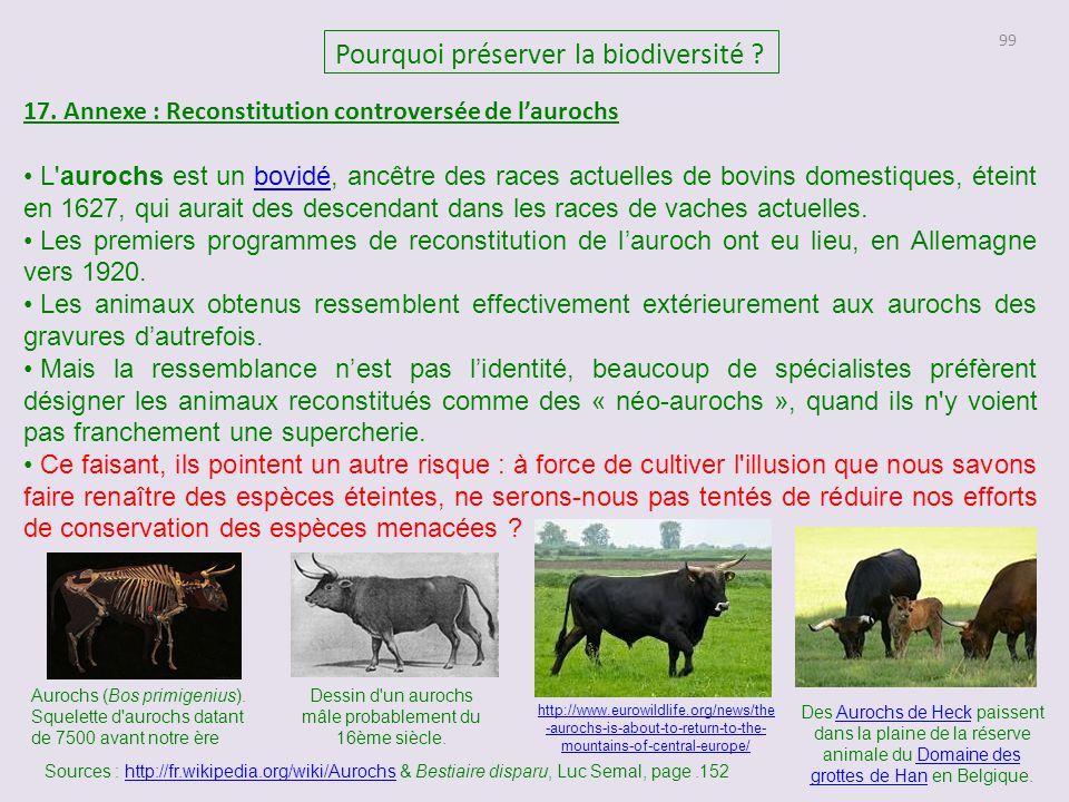 99 Pourquoi préserver la biodiversité ? 17. Annexe : Reconstitution controversée de l'aurochs L'aurochs est un bovidé, ancêtre des races actuelles de
