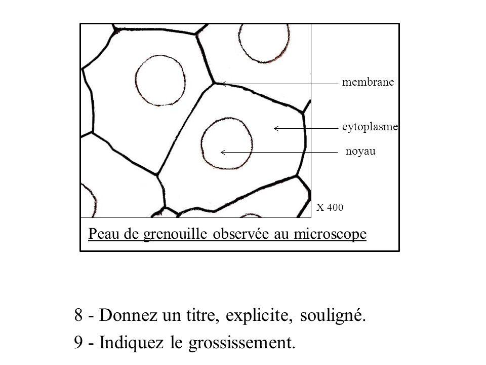 8 - Donnez un titre, explicite, souligné. 9 - Indiquez le grossissement. X 400 Peau de grenouille observée au microscope membrane cytoplasme noyau
