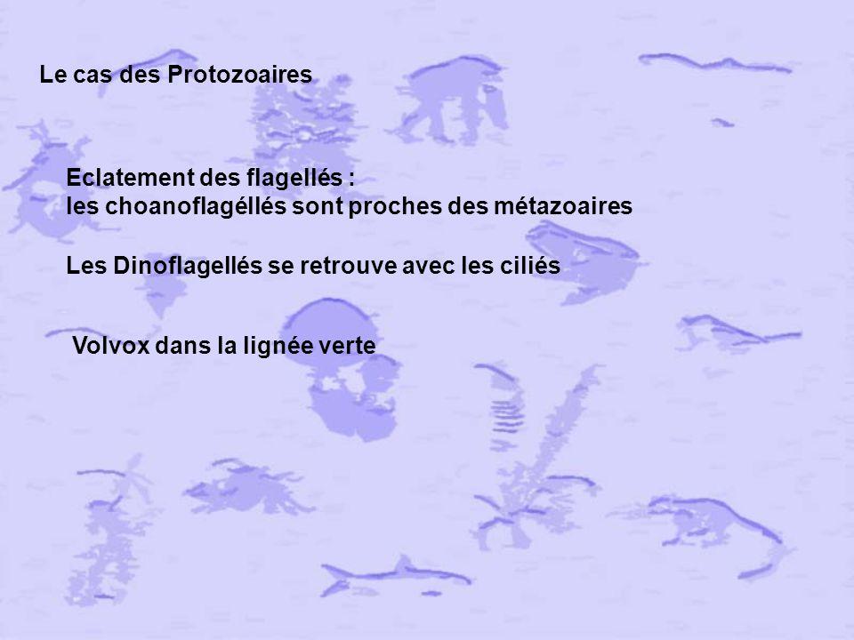 Triploblastiques et coelomes Caractéristique des animaux Plathelminthes (vers plats) Némathelminthes (vers ronds) Acoelomates & Pseudocoelomates = Coelome qui a secondairement disparu coelomates NON MONOPHYLETIQUES