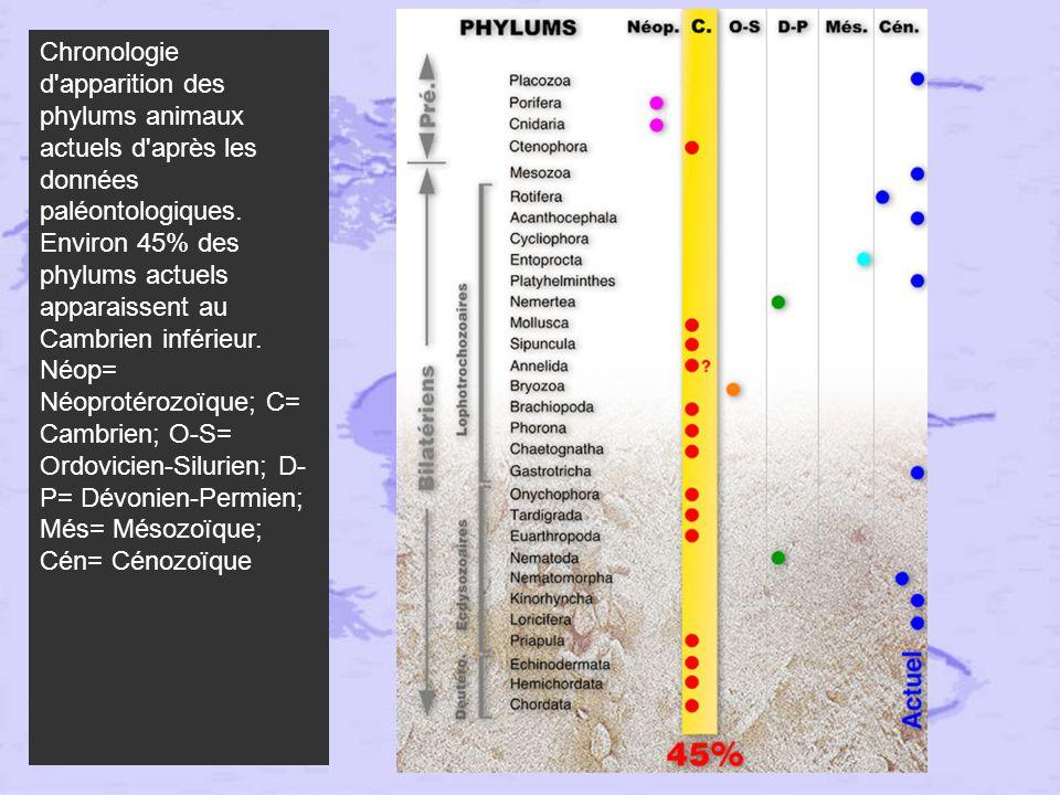 Schéma évolutif intégrant données moléculaires (arbre) et paléontologiques.