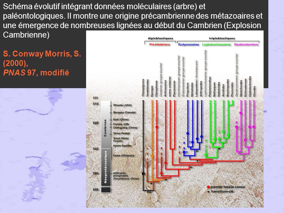 Conclusions 1) fin des Acoelomates, des pseudocoelomates : tous les triploblastiques sont des coelomates, Acoelomates et pseudocoelomates sont intégrés dans les protostomiens 2) éclatement des protostomiens : les Lophotrochozoaires et les Ecdysozoaires.