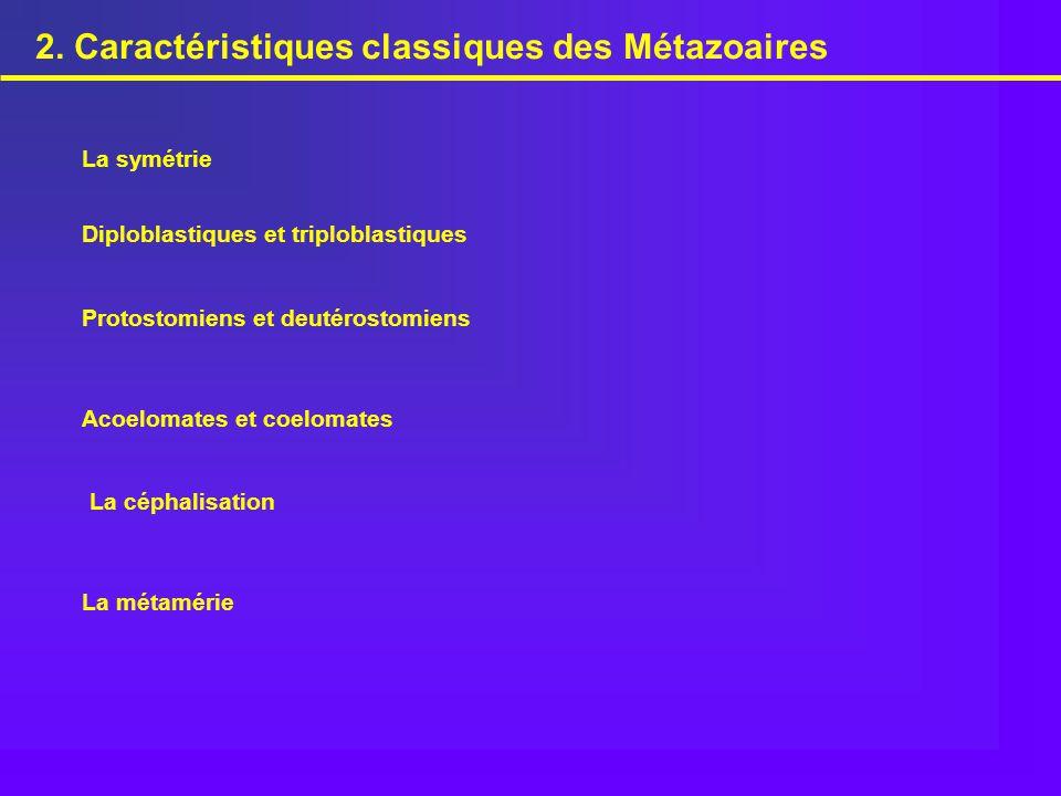 Parenchymiens Némertes Plathelminthes Entoproctes Mollusques Siponcles Annélides Caractères dérivés propres des SPIRALIENS Segmentation de l'oeuf de type spirale