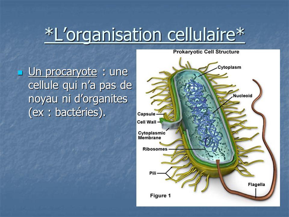 *L'organisation cellulaire* Un procaryote : une cellule qui n'a pas de noyau ni d'organites (ex : bactéries).