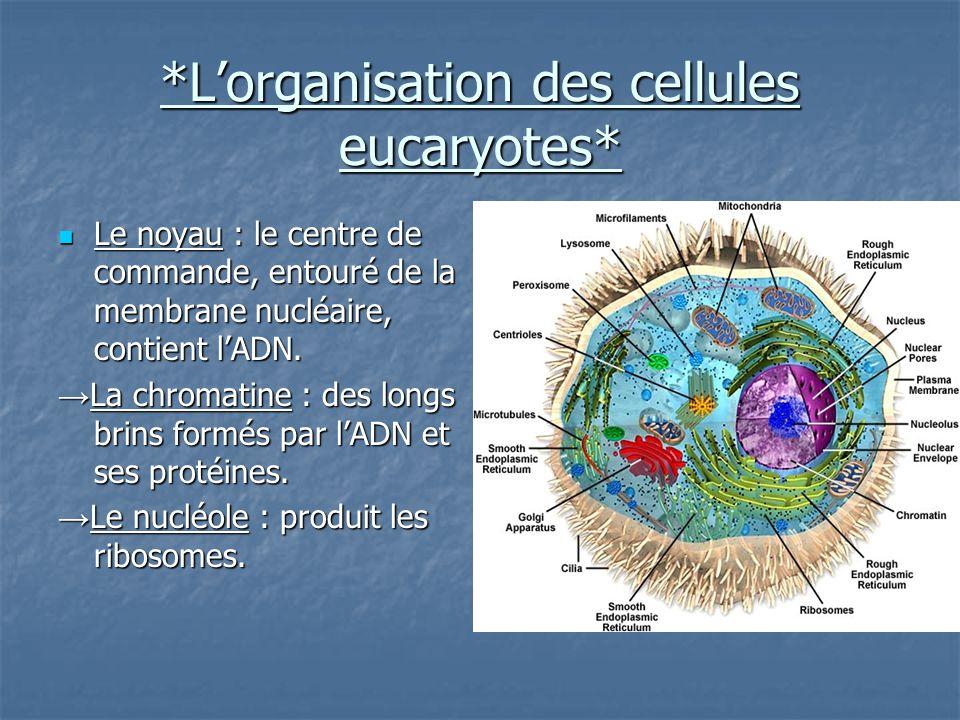 *L'organisation des cellules eucaryotes* Le noyau : le centre de commande, entouré de la membrane nucléaire, contient l'ADN.
