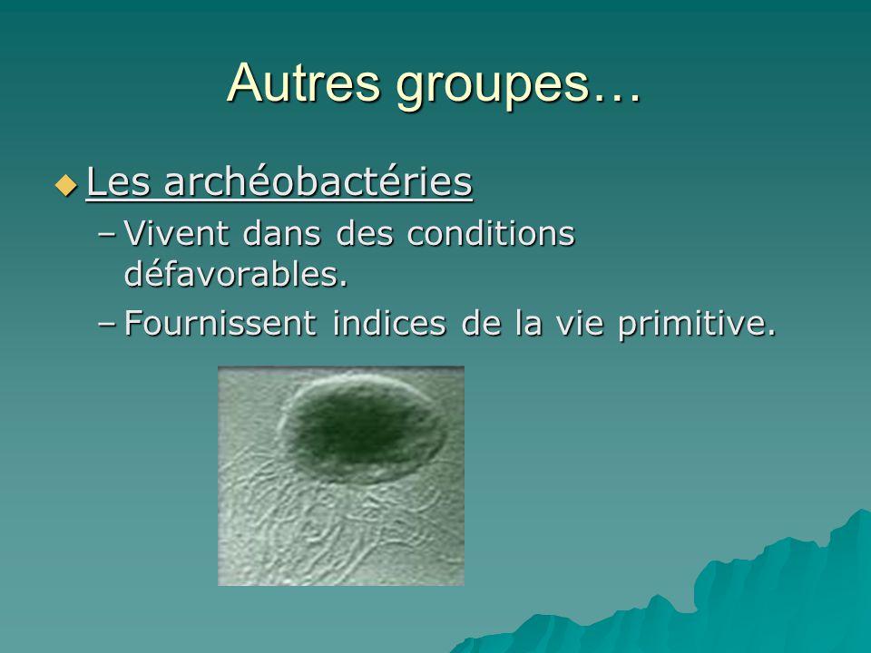 Autres groupes…  Les archéobactéries –Vivent dans des conditions défavorables. –Fournissent indices de la vie primitive.