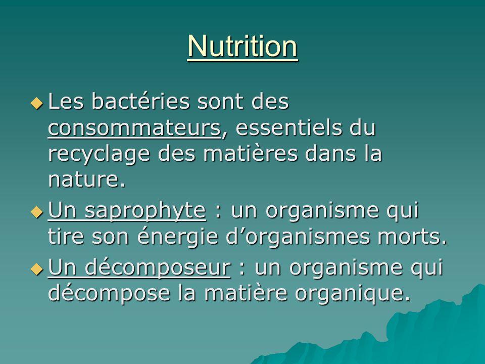 Nutrition  Les bactéries sont des consommateurs, essentiels du recyclage des matières dans la nature.  Un saprophyte : un organisme qui tire son éne